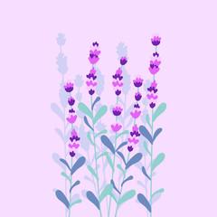 Lavender beautiful colorful bouquet vector illustration flat desing