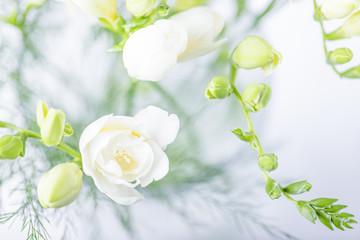 Beautiful white freesia flowers. Top view, toned photo