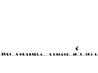 Background of black birds on a wire isolated