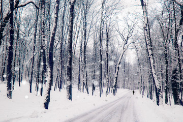 Winter road in a wood. Quiet snowy day on a forest. Christmas landscape.