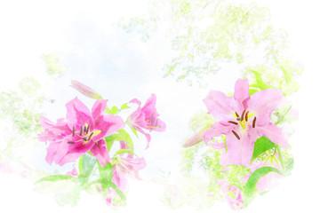 初夏のユリ Close up of lily flower