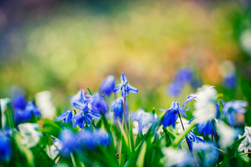 Garden Poster Spring spring flowers background