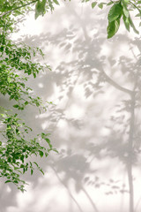 Wall Mural - tree branch and leaf with shadow on a white concrete wall
