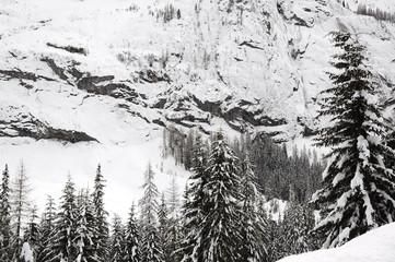 Winter scene in a fir forest after a big snowfall in the italian Dolomites near Canazei, Trentino Alto-Adige. Val di Fassa, Italy.