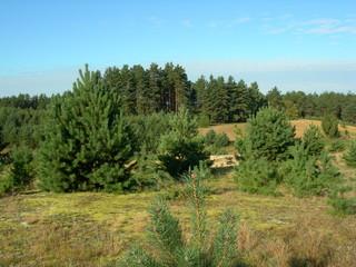 Kaszubskie lasy - polana
