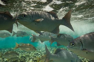 Caribbean Sea Life on the Reef