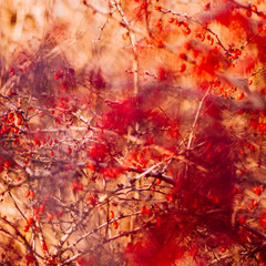 abstract autumn art - nature and environment concept