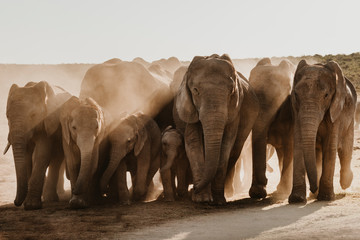 Elefantenfamilie Wall mural