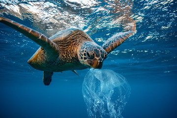 Photo sur Aluminium Tortue Water Environmental Pollution Plastic Problem Underwater animal