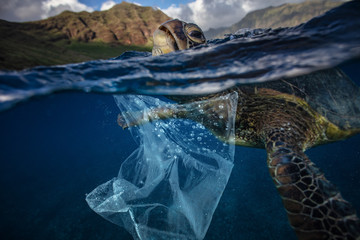 Water Environmental Pollution Plastic Problem with Wildlife Underwater