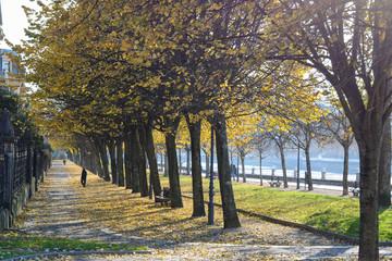 Hermoso paseo urbano en una agradable tarde de otoño, con árboles y hojas caídas