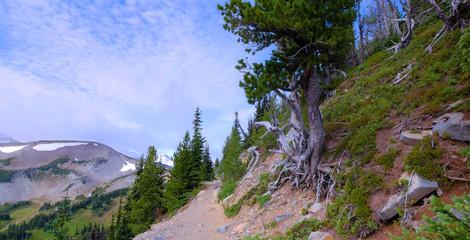 Summer at Mount Rainier National Park, Washington..