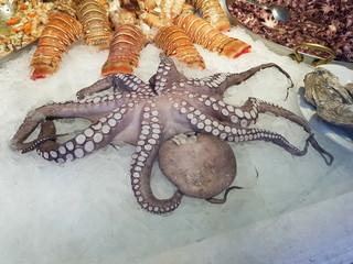Delikatessen: Frische Meeresfrüchte am Fischmarkt