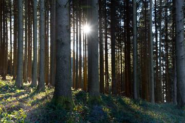 Sonnenstrahlen in den Wälder des Schwarzwaldes nahe Freiamt
