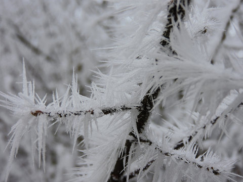 Frozen branch with huge ice crystals in the nature. Taken near Karlsruhe, Germany
