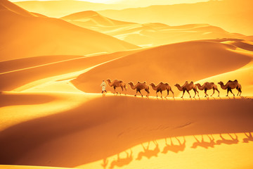 Wall Murals Drought desert camels team