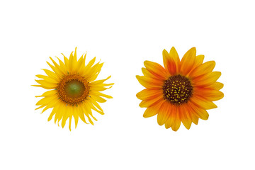 Yellow and Red Sunflower isolated on white background with clipping path.