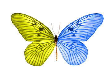 tropical yellow-purple butterfly.