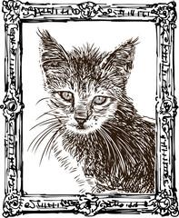 A sketch portrait of domestic kitten in an ornate frame