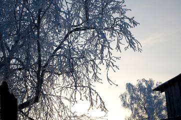 tree branch on sky background