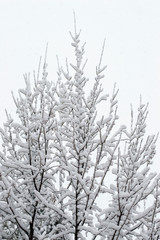 Beautiful pattern of tree branches under the snow