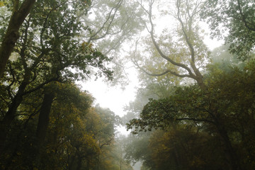 Foggy Trees In Autumn