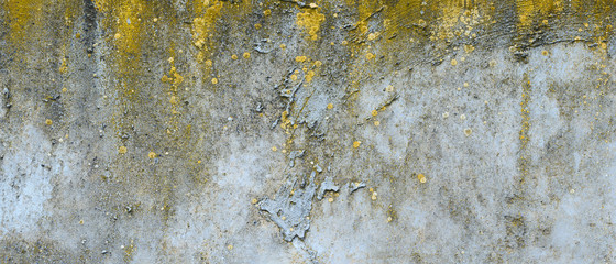 Asbestos slate texture concrete covered with lichen and moss