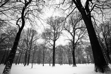 Winter landscape with bare branches on tree and snow