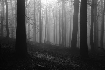 Forest during foggy weather