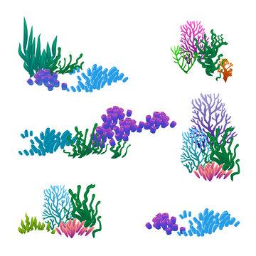 vector set of seaweed corals anemones
