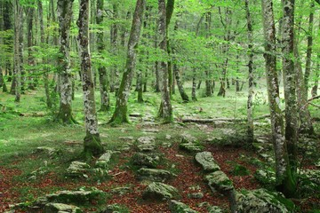 forest of orduña, basque country, Spain