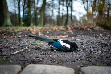 Dead bird in Wilhelmshaven, Germany.