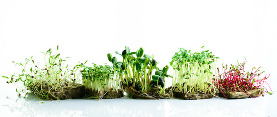 Photo sur Plexiglas Légumes frais microgreen dill sprouts, radishes, mustard, arugula, mustard in the range on a light background