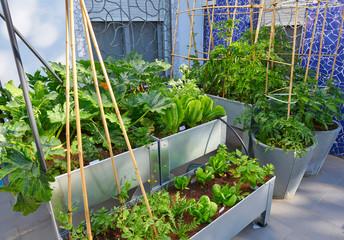 Raised bed orchard urban garden