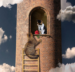 The cat with a red rose climbed the high tower to his lover.