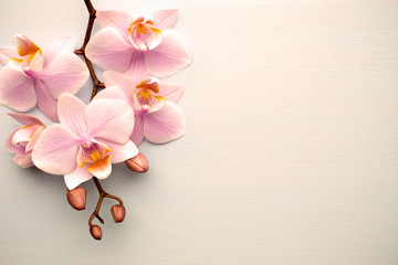 Wall Mural - Living coral color orchid on the pastel background.