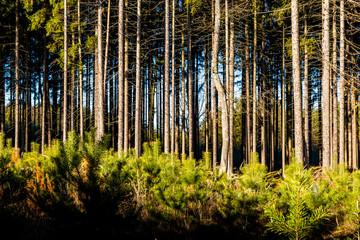 Forest. Warm, snowless winter in the Czech Republic
