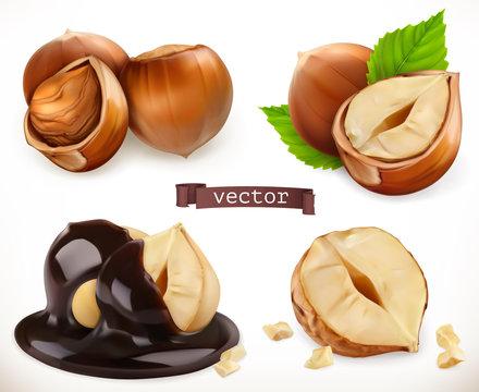 Hazelnut. 3d realistic vector icon set