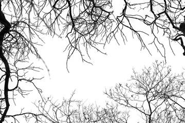jesie艅, drzewa, przyroda, li艣cie, krajobraz