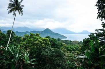 View of tropical landscape with palm trees and blue sky on the island of Principe on Sao Tome and Principe