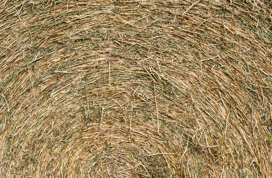 rustic background with alfalfa bale texture in the field