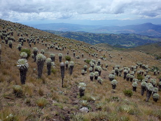 The Paramo of Oceta near Mongui, Colombia