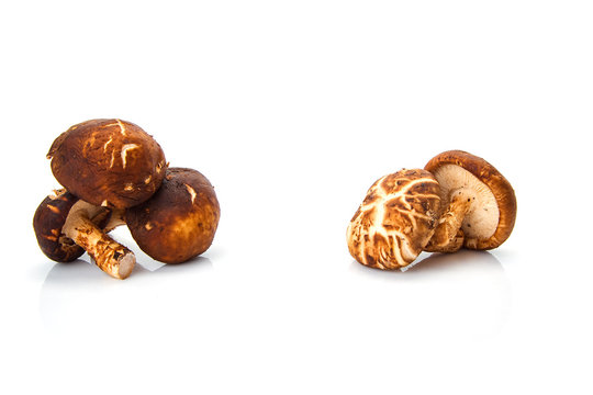 Shiitake mushroom on the White background