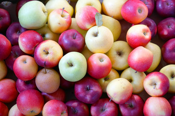 Wall Mural - fresh picked apples with different color as food background