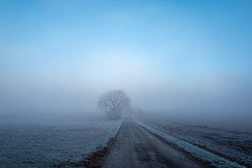 tree in fog at a rural road