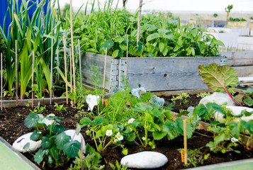 The people's kitchen gardens in the big city