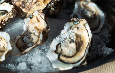 Oysters on the plate.
