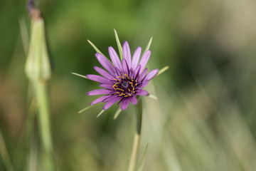Purple flower with a green, shallow depth of field, blurry background.