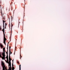 Wall Mural - Spring background with blossom of pastel pink pussy willow branches , front view with copy space for your design. Springtime background