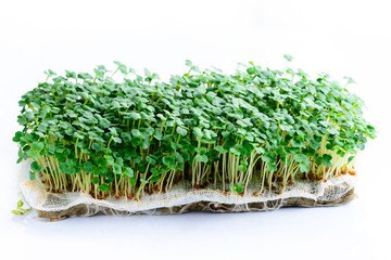 microgreen arugula sprouts on a light background Raw sprouts,